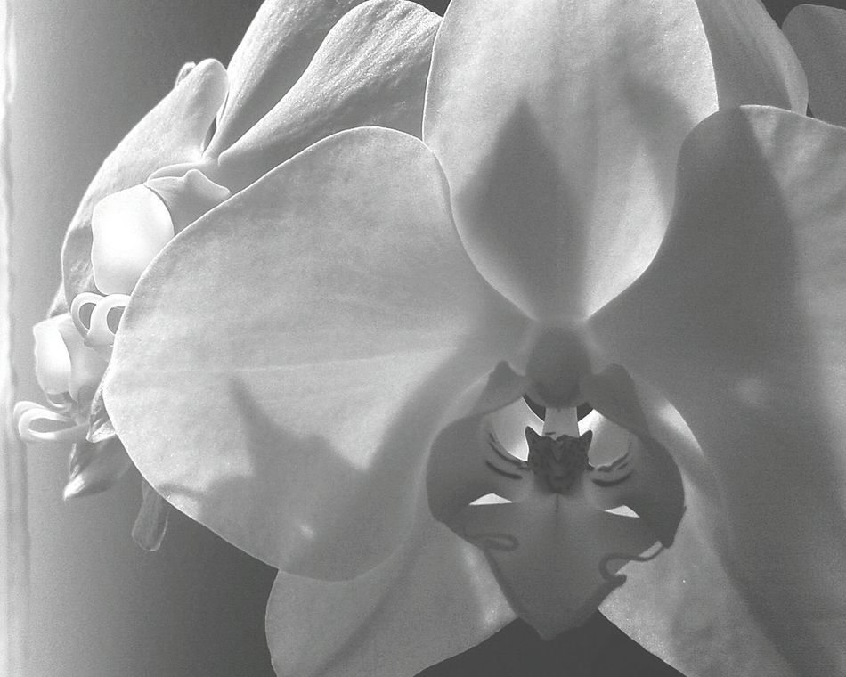 Black & White Flowers Part2♡