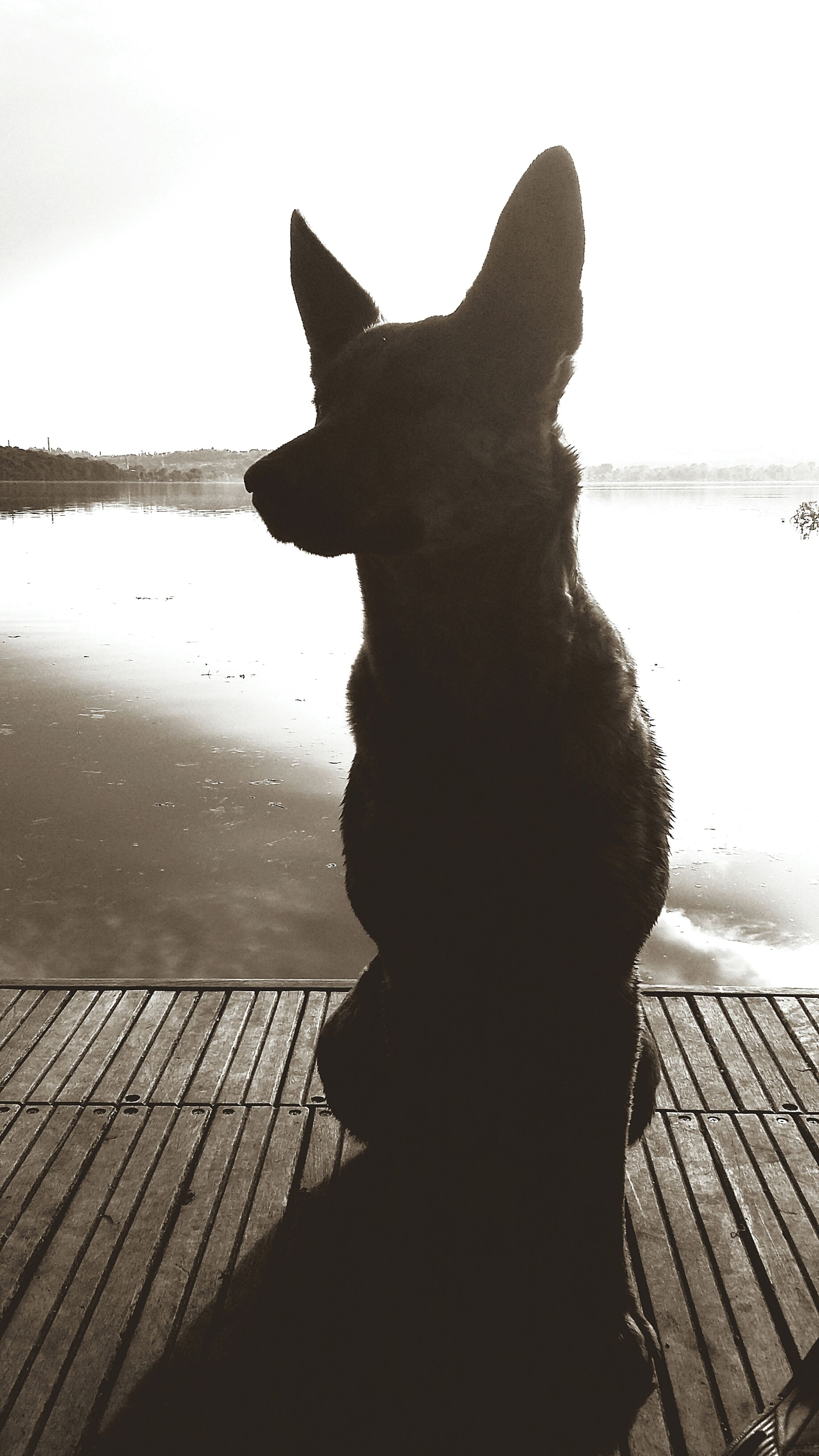 water, one animal, silhouette, animal themes, sky, sea, sitting, pets, reflection, mammal, sunlight, relaxation, nature, outdoors, pier, lake, day, dog, clear sky, domestic animals