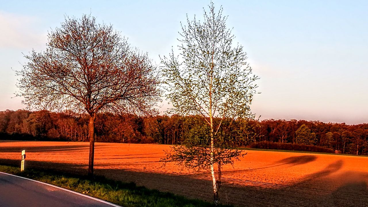 Shadow & Light... Tree No People Outdoors Sport Sky Day Nature Beauty In Nature Pixelated GetbetterwithAlex Originalpicture Beauty In Nature Wendland Tree Grass Fields