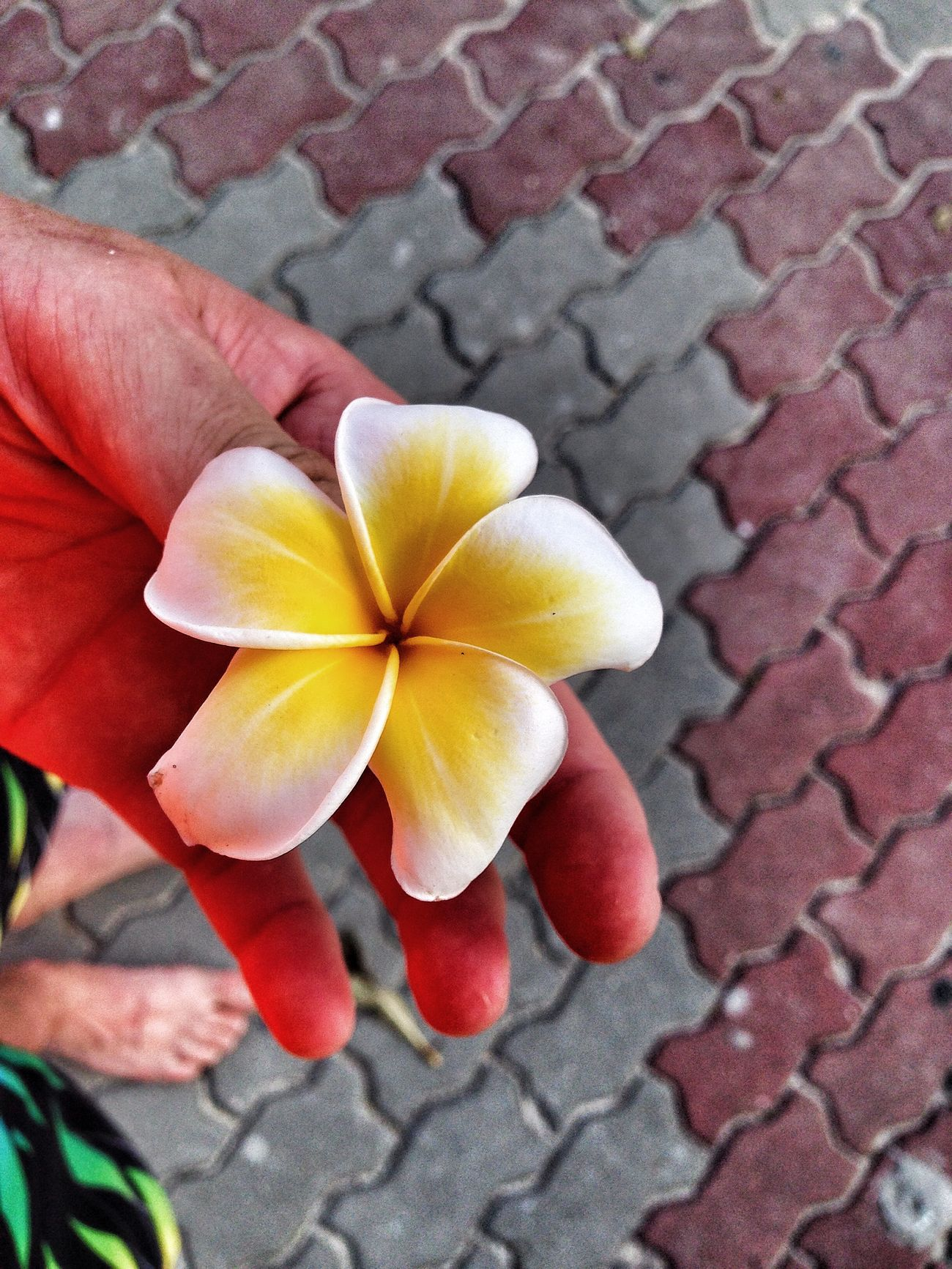 Islandlife Flowers