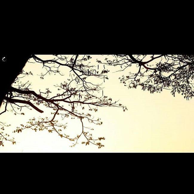 Nature. Art. Nature Art Natureart Naturelovers Tree Branch Treescollection Earlymorningorlateevening Coolio HASHTAG Mustaffa Buffering Watermark Lovethis Sankeytank Bengalurudairies Bengaluruweather Banglore Malleshwaram Karnataka Thatsit
