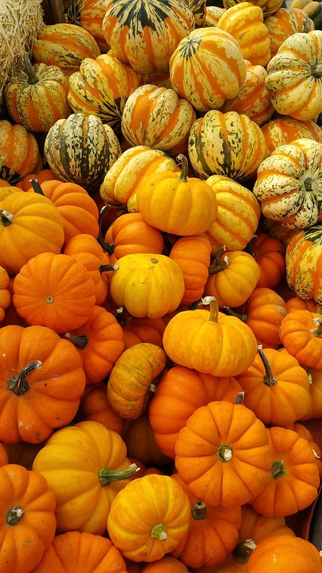 display of autumn squash at a farmer's market Abundance Arrangement Backgrounds Choice Collection Consumerism Food Food And Drink For Sale Freshness Full Frame Heap Large Group Of Objects Market Market Stall Orange Orange Color Order Retail  Retail Display Ripe Variation Vibrant Color Yellow