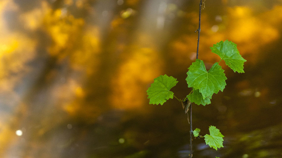 Beauty In Nature Creek Day Focus On Foreground Freshness Green Color Growth Illuminated Leaf Leaves No People Outdoors Plant Red Dirt Stream Sunlit Vine Wooded Trail
