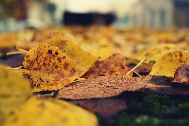 Leaf Autumn Nature Outdoors Day No People Naturlover Autumn Leaves Nature_perfection Explorenature Autumnbeauty Autumn Colors Tranquility Bright Colors Nature Photography NatureIsBeautiful Hobbyphotography