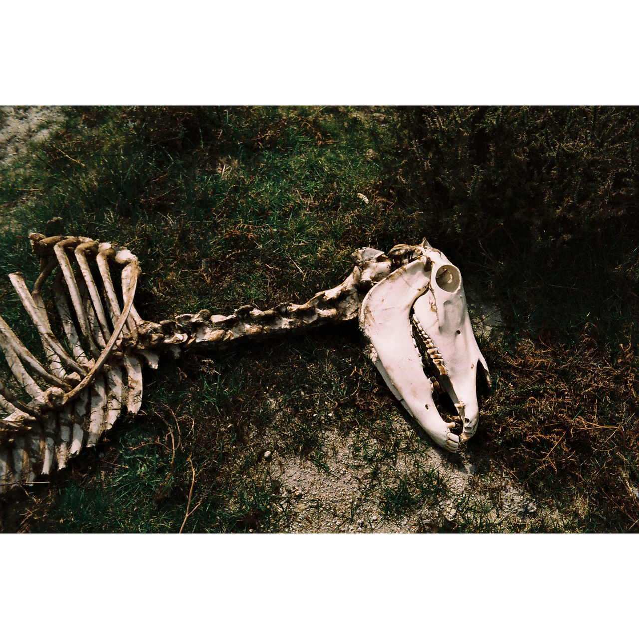 35mm Analogue Analogue Photography Day Dead Dead Animal Film Horse Nature Outdoors Portugal EyeEmNewHere