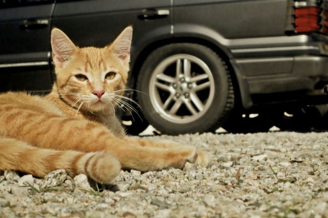 Relaxing Hanging Out Enjoying Life Taking Photos Pets I Love My Cat Ground Wanderlust Wednesday Pets Corner The Moment - 2015 EyeEm Awards