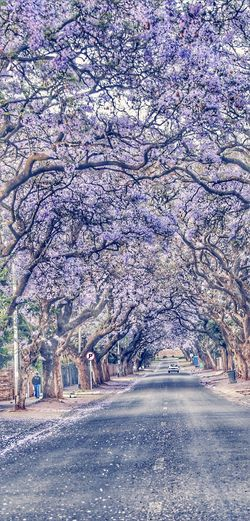 On the road Day The Way Forward Tree Outdoors Nature Beauty In Nature No People Growth Snow Sky Pretoria, South Africa Purple Flower Jacaranda Trees Nature Road Tree People In The Distance People In Suburb Jacaranda Tree Jacaranda Flowers Beauty In Nature City