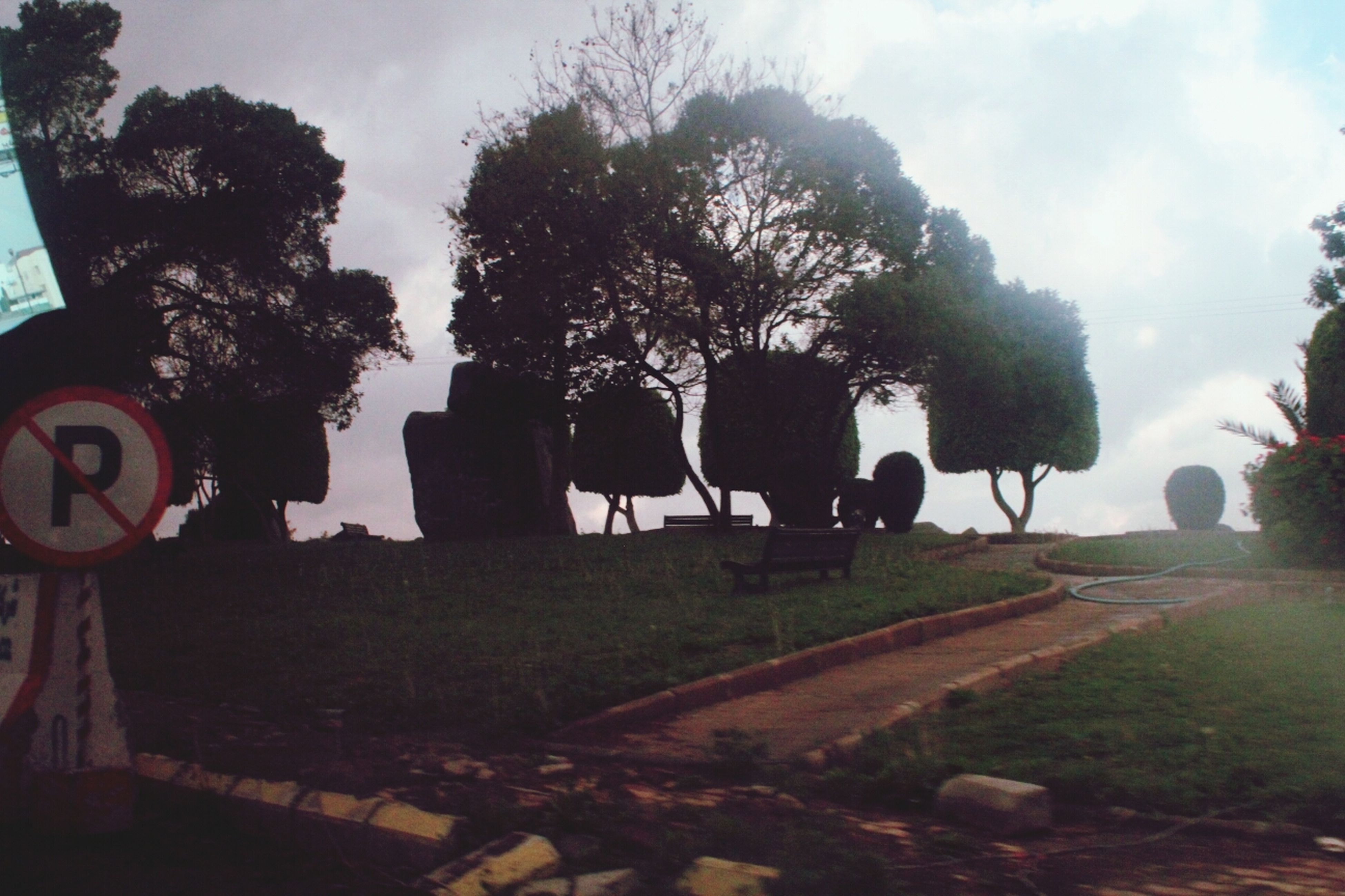 tree, sky, animal themes, art and craft, sculpture, art, animal representation, cloud - sky, creativity, statue, mammal, built structure, cloud, human representation, cemetery, no people, nature, outdoors, sunlight