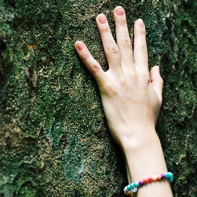 Feel the energy🌳 Дерево, которому больше 5 тыс. лет💭 Wood Travel Travelbook Mood Instamood Instadaily Inspiration Nature Hand Shotoftheday Travelgram Igersoftheday Picoftheday VSCO Vscocam Bestoftheday Vacation Green Evergreen Energy SriLanka Trip Sinharaja Forest Rainforest igtravel instaasia feeling