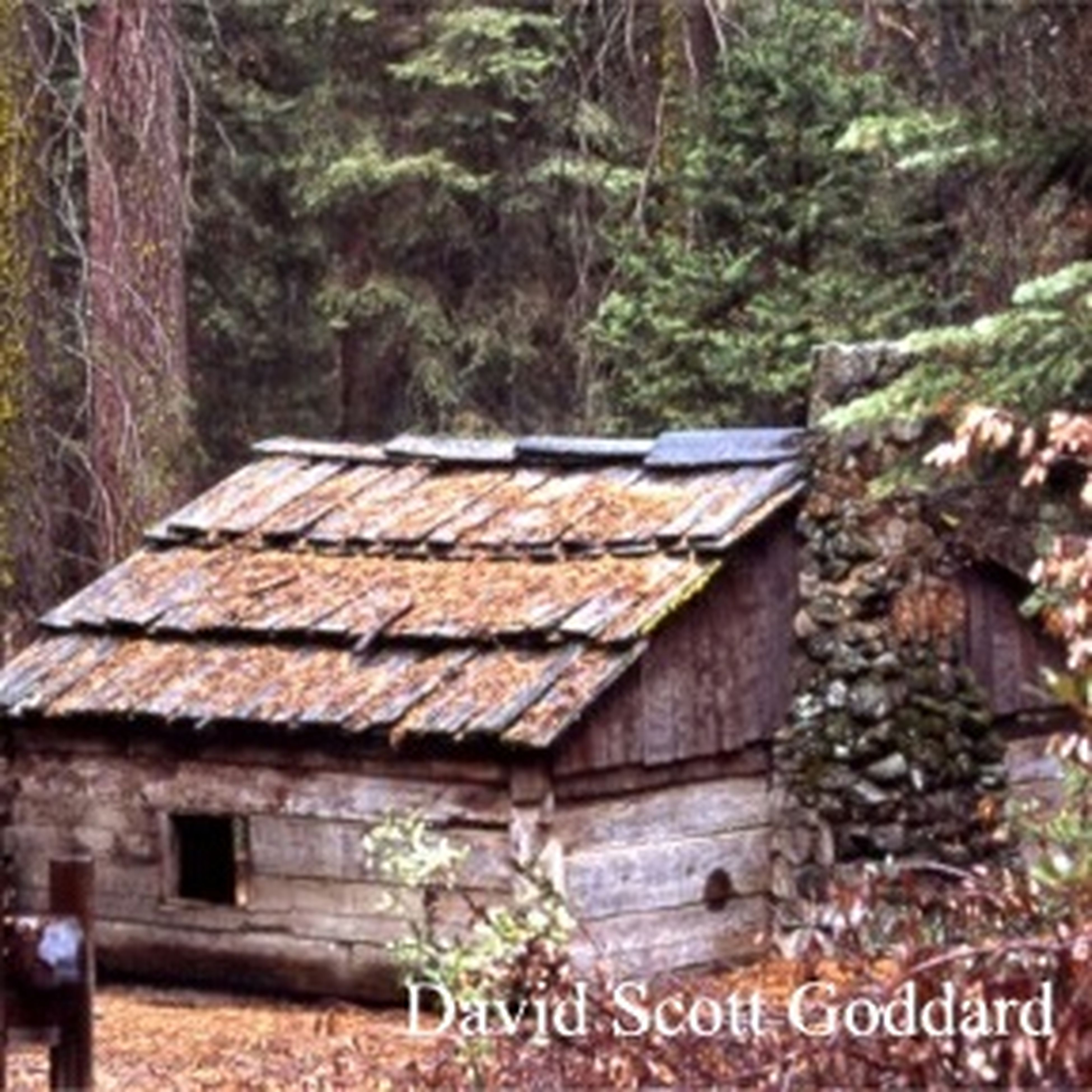 tree, built structure, architecture, building exterior, house, roof, wood - material, old, day, focus on foreground, selective focus, outdoors, weathered, forest, abandoned, growth, no people, nature, run-down, plant