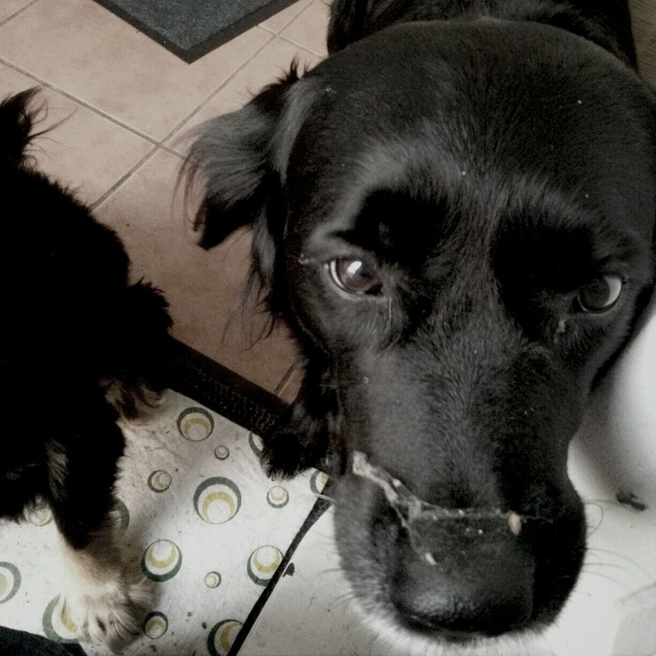 I did not move. Really! || Dog My Secret Treasure Of Happiness Could This Eye Lie? We Had Fun