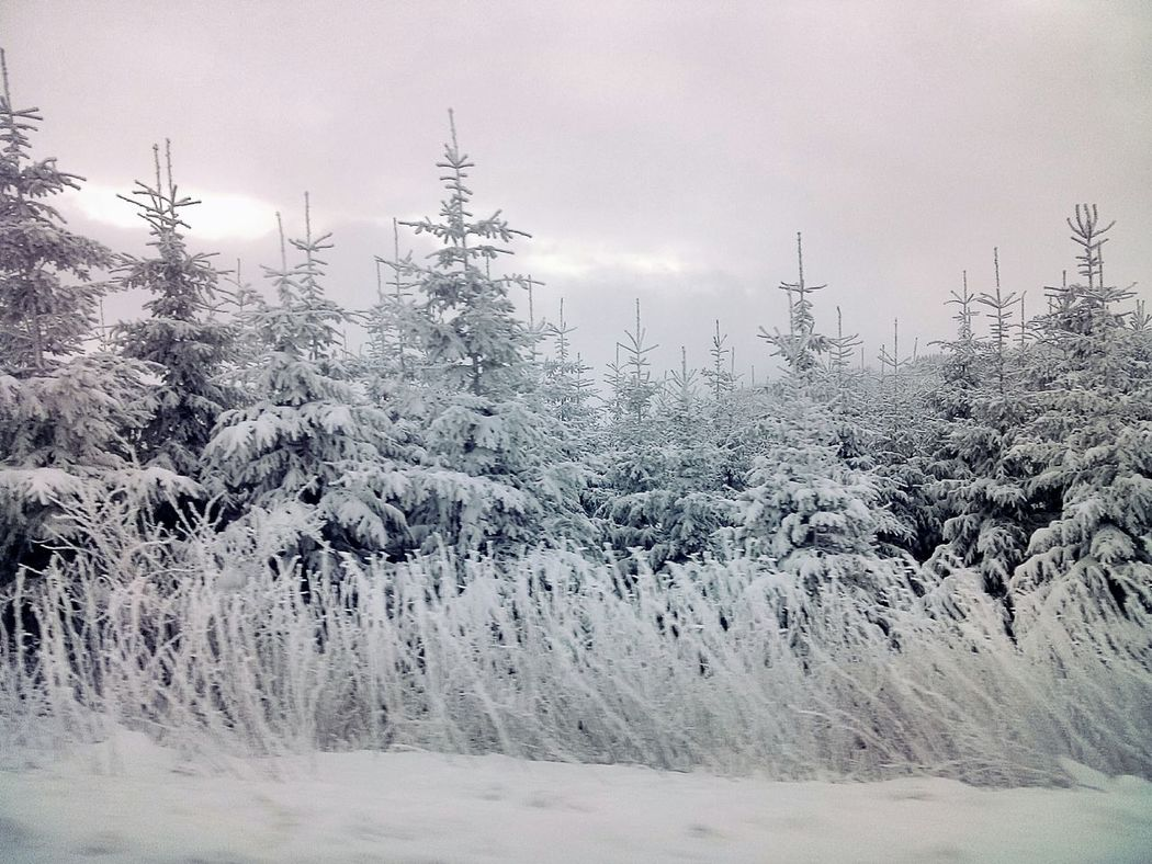 Winter Frozen Nature Snow Mountains Landscape Traveling at Kopaonik, Serbia My Winter Favorites It's Cold Outside Landscapes With WhiteWall