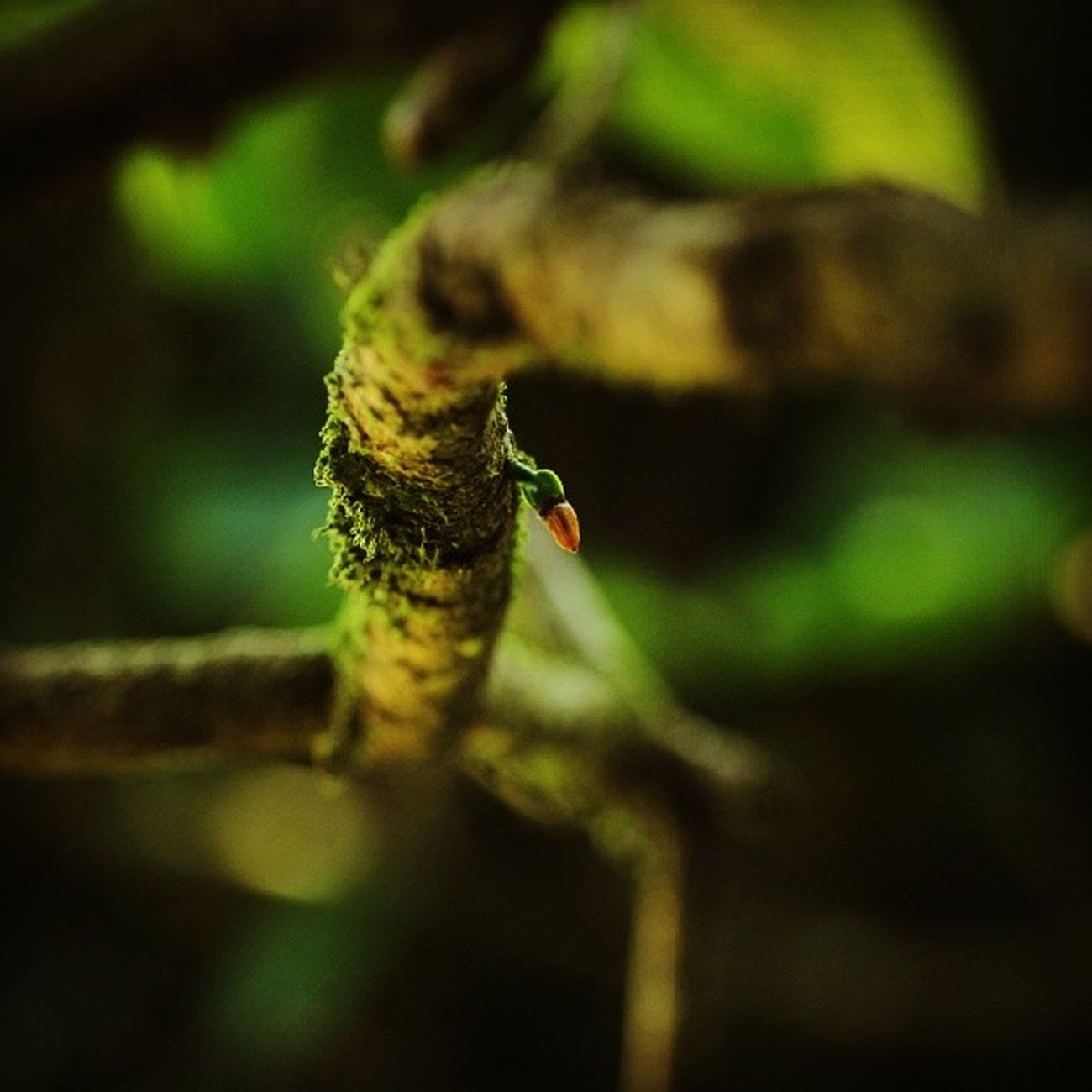Nature! MacroLadilla