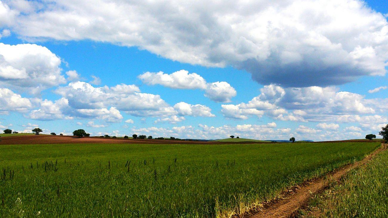 Landscape Spring Extremadura EyeEm Nature Lover