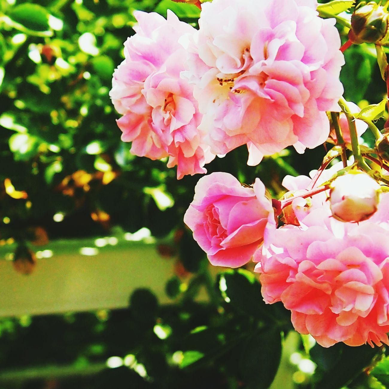 暑さなんて感じない(今年最高気温) Enjoying The Sun Picking Flowers  Gardening First Eyeem Photo