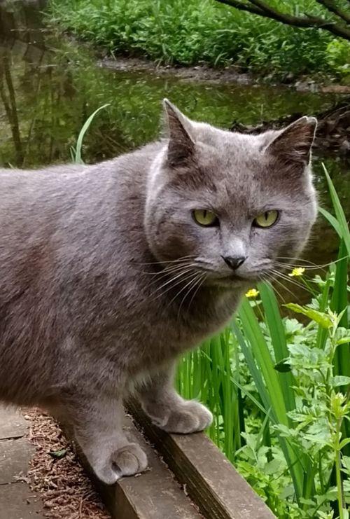 野良猫 自由猫 Love Cat ♥