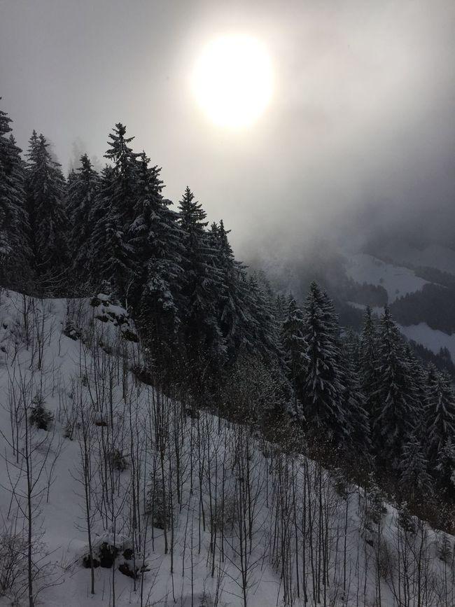 Schwarzsee Snow ❄