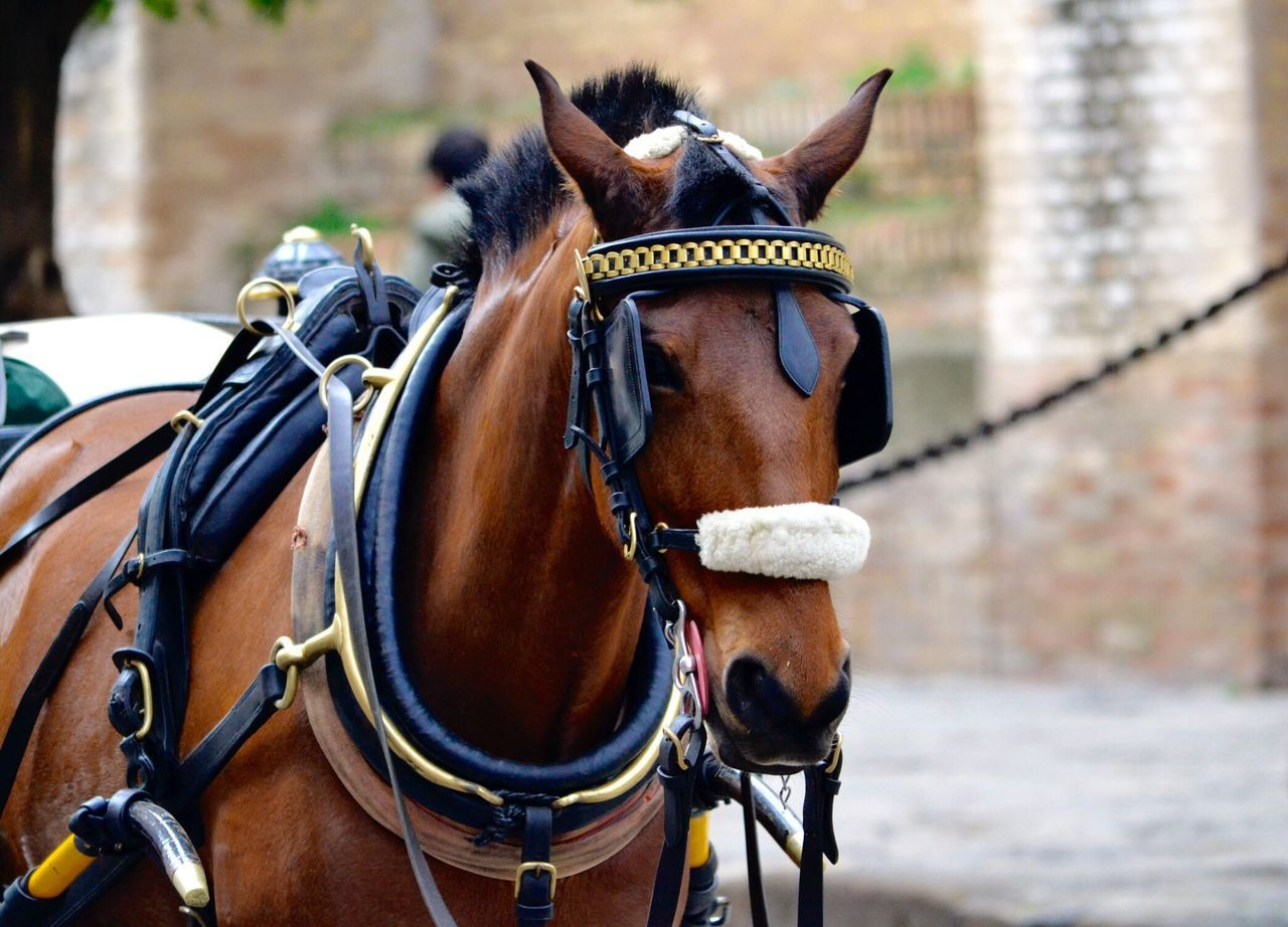 Horse Domestic Animals Animal Themes Brown Working Animal One Animal Outdoors Herbivorous Bridle Travel Transportation No People España Animal