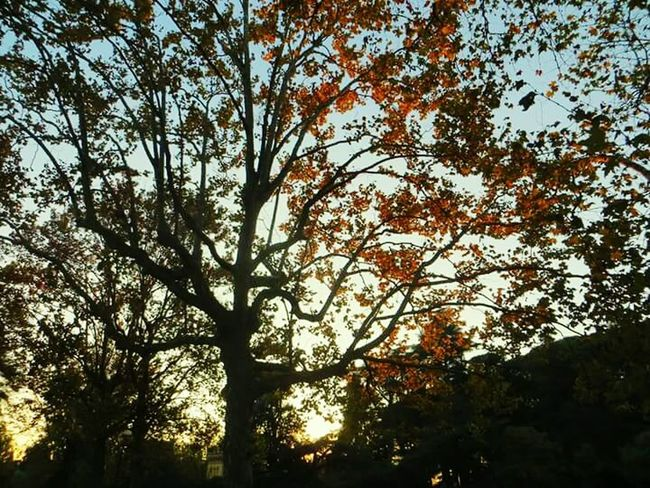 Taking Photos Hello World Check This Out Magical Trees Hugging A Tree Tree_collection  Silhouettes Sunset_collection Reflection_collection Sun Reflection