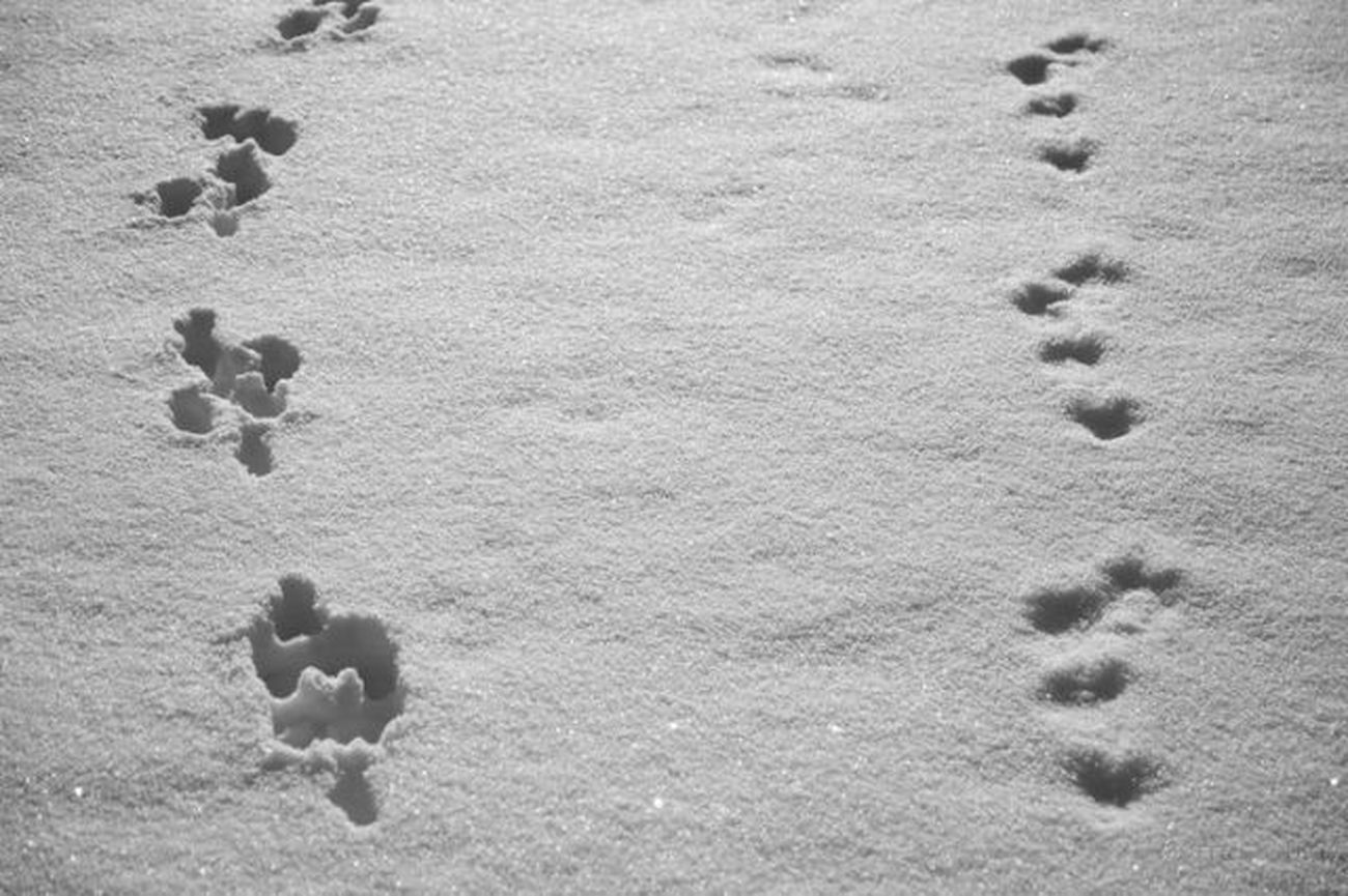 Signs i the snow.... Signs Traces Snow Steps