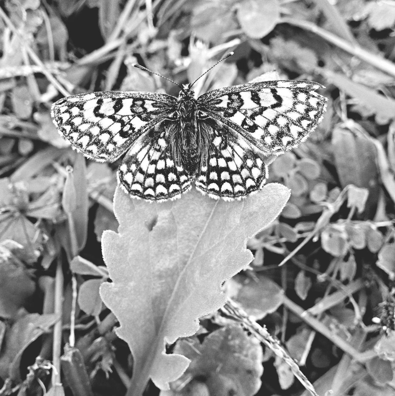 Butterfly - ♥️ Street Photography AMPt - Still Life (Nature Morte) France Beautiful ♥