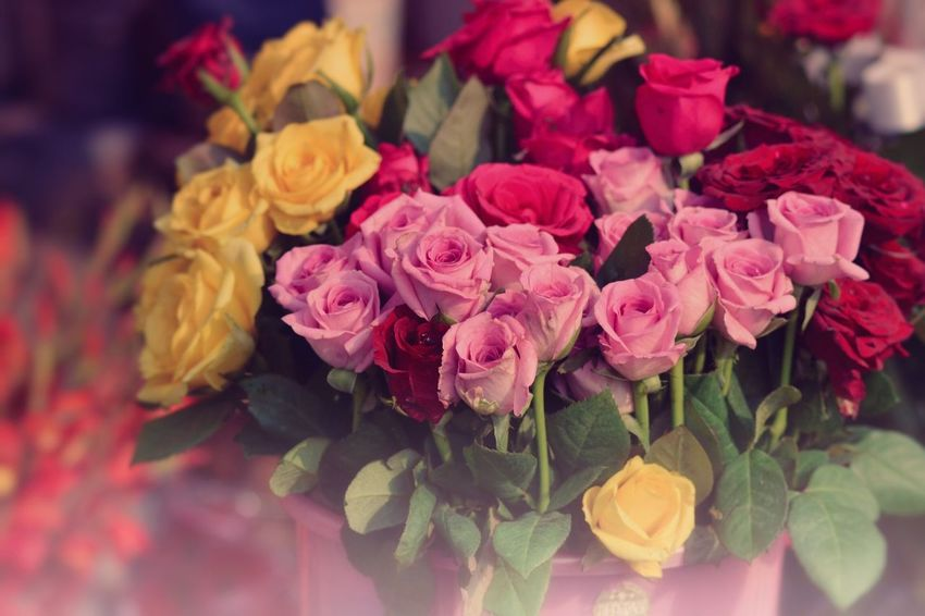 Flower Petal Fragility Freshness Rose - Flower No People Pink Color Close-up Beauty In Nature Flower Head Nature Bouquet Indoors  Leaf Day