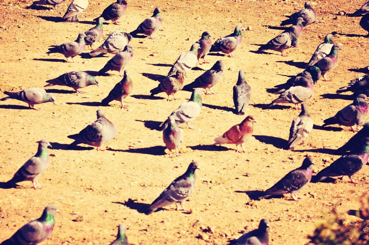 The birds of temple... The Moment - 2014 EyeEm Awards Check This Out Bhutan