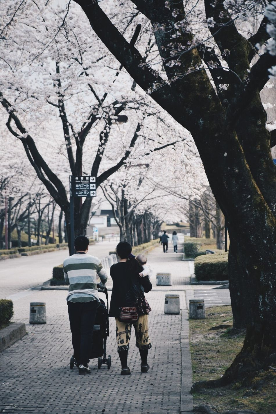 family👪 Tree Two People Walking Full Length Branch Rear View Real People Men Togetherness Nature Women Outdoors Bare Tree Day Standing Warm Clothing Beauty In Nature Flower Adult Sky 一眼 一眼レフ Nature City Nikon