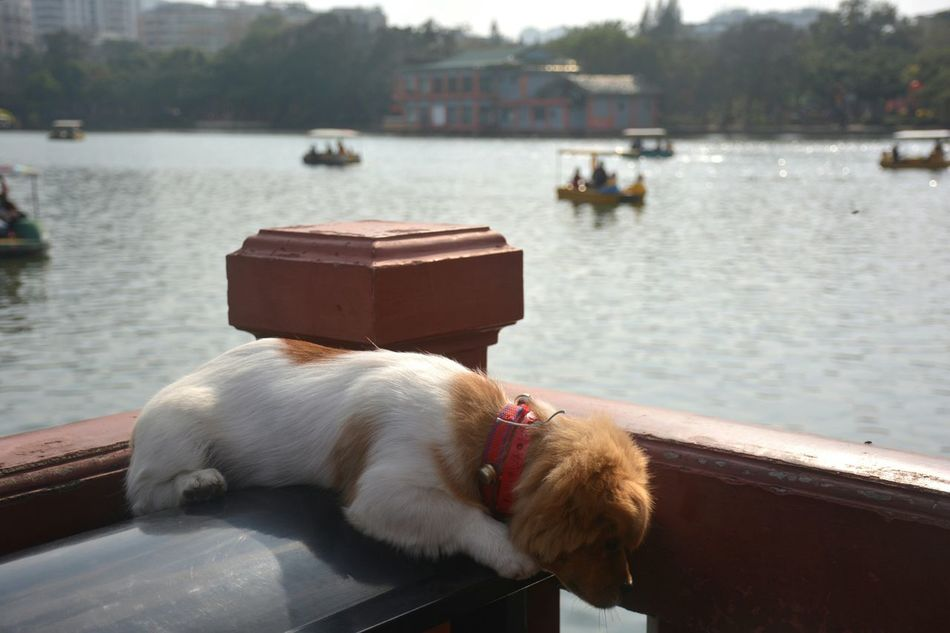 Urban Nature China Garden Dog Pet Park Lake Boat Animal From My Point Of View Capture The Moment Showcase: February Beautiful Day