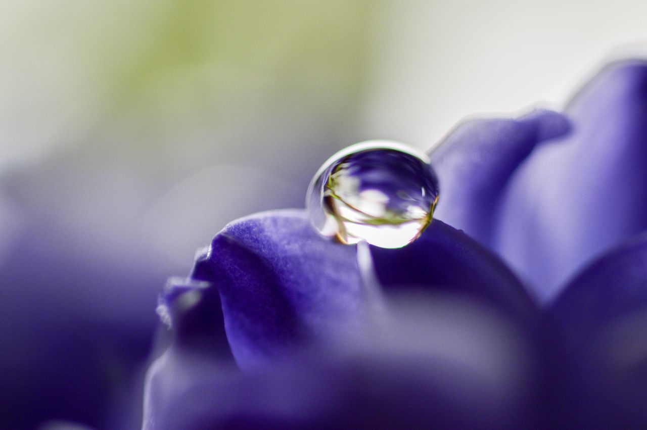 Single rain drop on a lilac petal Flower Fragility Purple Close-up Nature Flower Head Beauty In Nature Day Outdoors Macro RainDrop Water Droplets Water Drops Dewdrops Macro Water Drops Macro_flower Rain Drops On Flowers Purple Flower Macro Photography Macro Nature Dew Drops Waterdrops Spring Springtime Spring Has Arrived