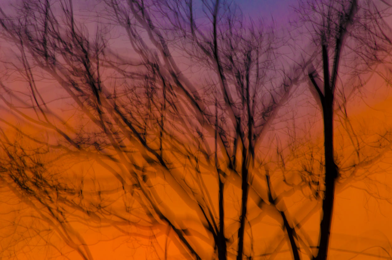 Sunsets Sunset_collection Sunset Doble Exposure Dobleexposición Exposure Tree Trees And Sky Tree Trunk Tree_collection  Surealism Sureal Sureal Landscape Sureal Landscapes Sureal Art