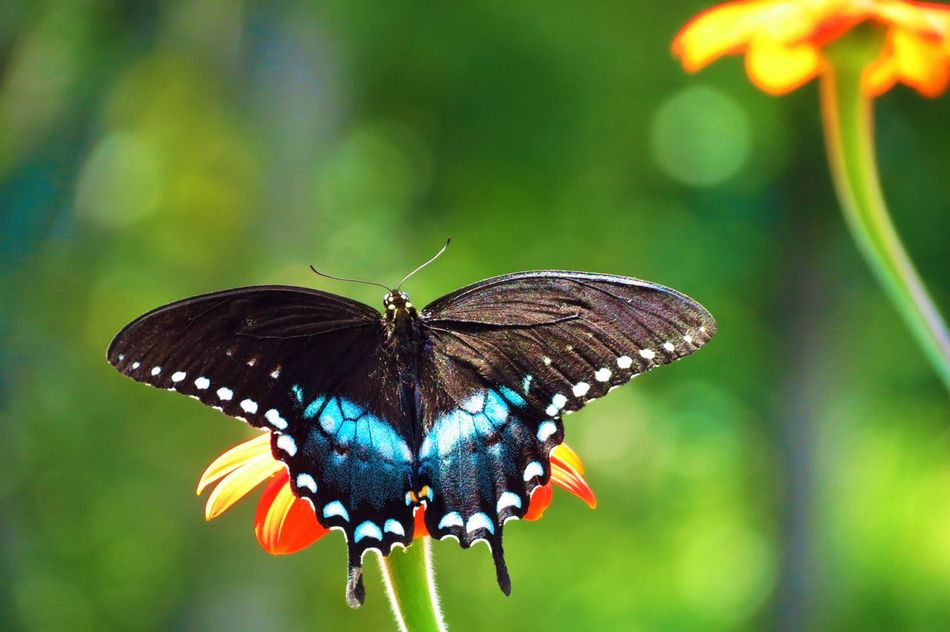 Beautiful stock photos of butterfly, Aethereal, animal Markings, animal Themes, animal Wing
