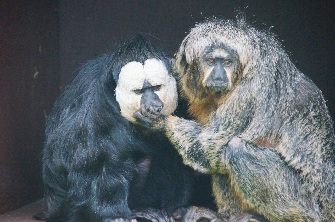 Monkeys Dont Talk... Shut Up (;   Relationship Animal Photography Animal_collection Like People