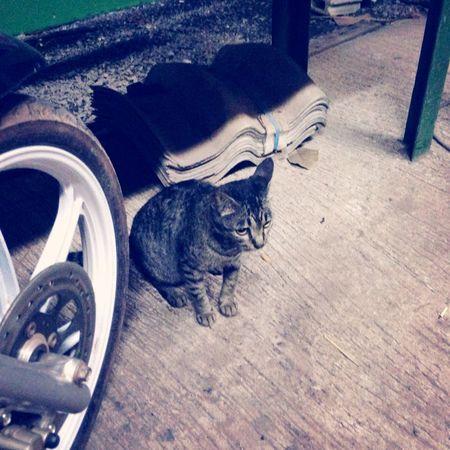 Cat Thailand :)