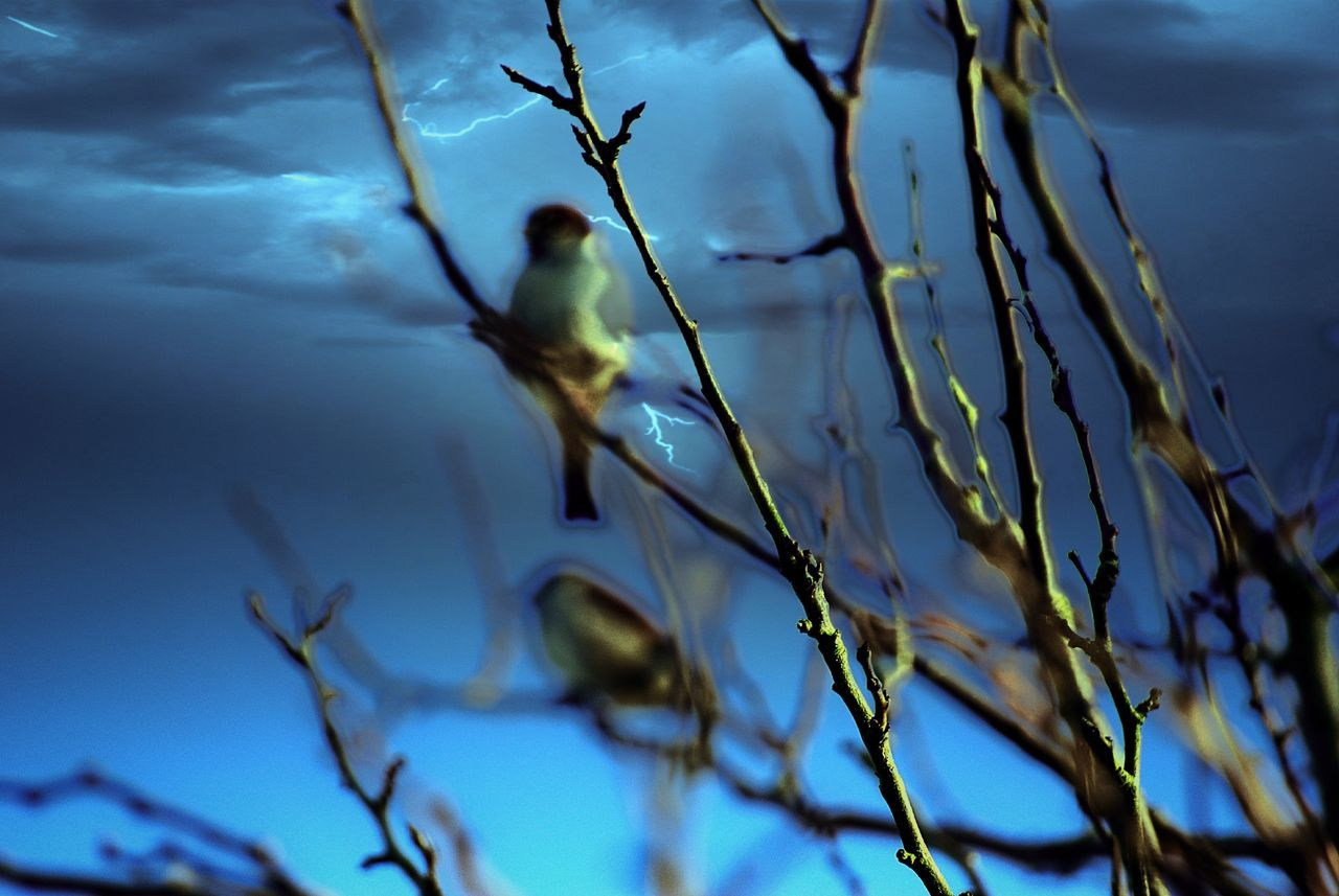 Photography Is My Escape From Reality! Early Morning Blues Birds_n_branches Peace And Tranquility Capturing Freedom Watching And Waiting....