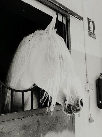 Horse My Horse Belle I Love Horses Horsepower Caballo ESPAÑOL Caballos 🐎🐎👢 Caballo!
