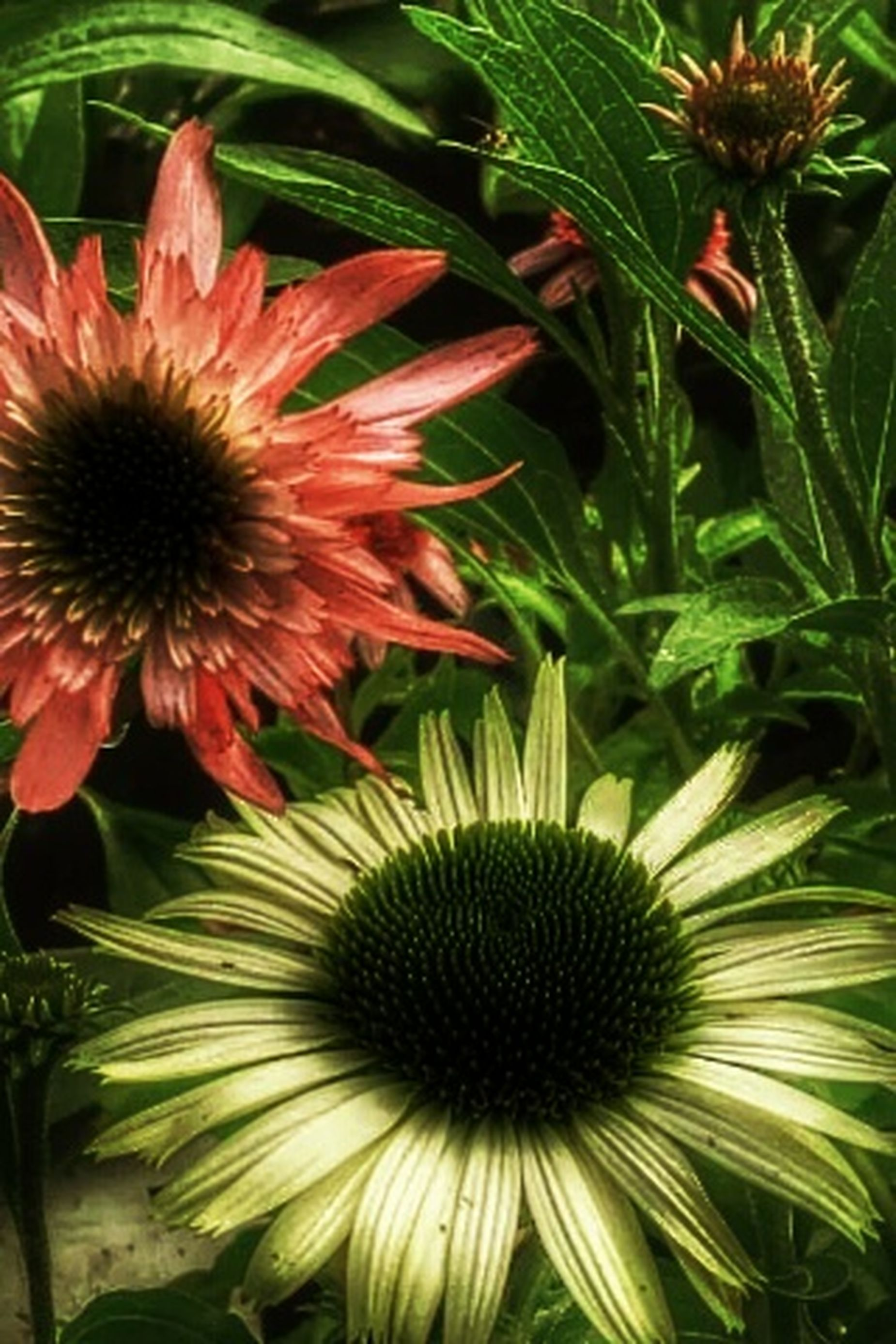 My Flower Obsession Flower Collection HDR _ Collection EyeEm Nature Lover