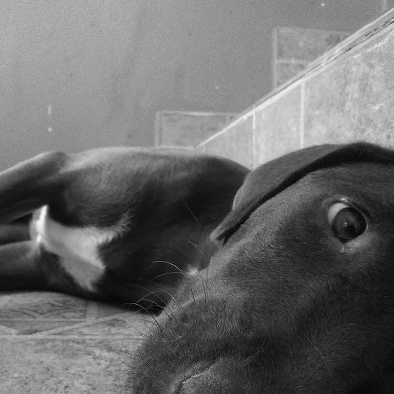 Oooi :3 vamos brincar ?? Android Androidography Androidcommunity Androidcamera AndroidCam Photographer Phography Photoshoot Photooftheday Colors Achadosdasemana Newinstagram Likeme Likesforfollow Followmeplease Follow4follow Followme Pet Adote DoeAmor Deamor Adotenaocompre Help Photographer Photooftheday photoshoot self makehappy behappy dog doginstagram