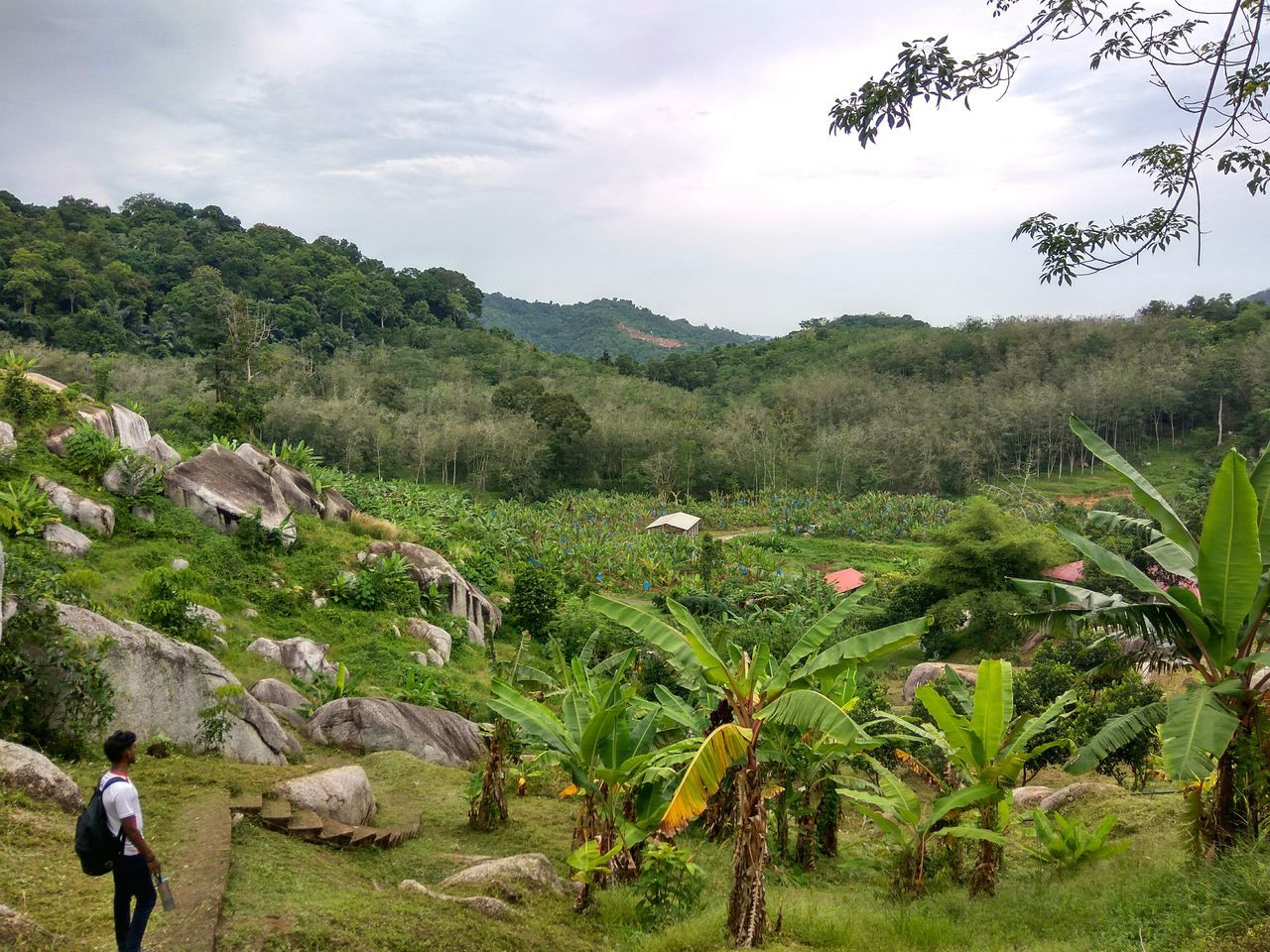 Country Living Field Landscape Rural Scene Tree Beauty In Nature Farmer Real People Nature Plant Outdoors Day Growth Country Living 🚜🌾🌽 Banana Tree Malaysia Scenery Malacca Malaysia Truly Asia Photooftheday Photography Aroundtheworld Mother Nature Is Amazing Mothernature Beautiful Nature Rocky Hills Caves Neighborhood Map