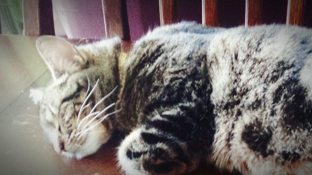 Taking Photos Cat♡ My Beautiful Cat🐈 Cats Of EyeEm Cats 🐱 Cat Sleeping