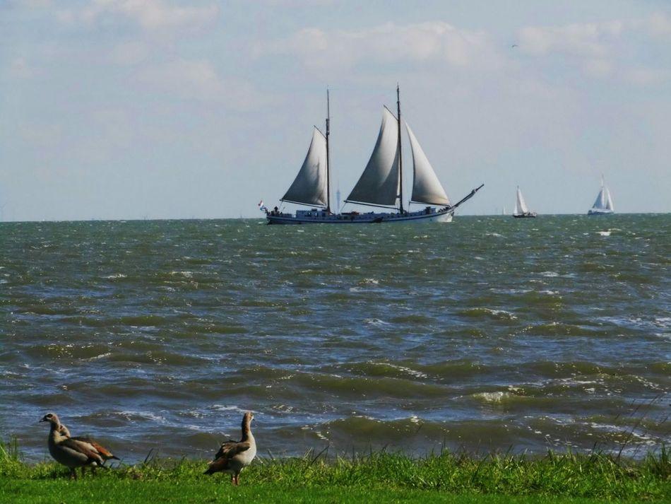 Ijsselmeer Taking Photos Sailing Goose Goo Nature nat