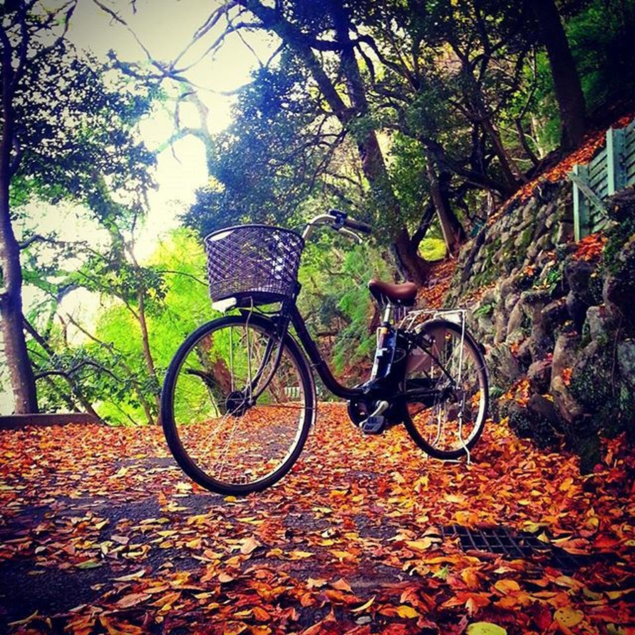 bicycle, leaf, autumn, tree, day, change, nature, outdoors, transportation, no people, land vehicle, beauty in nature