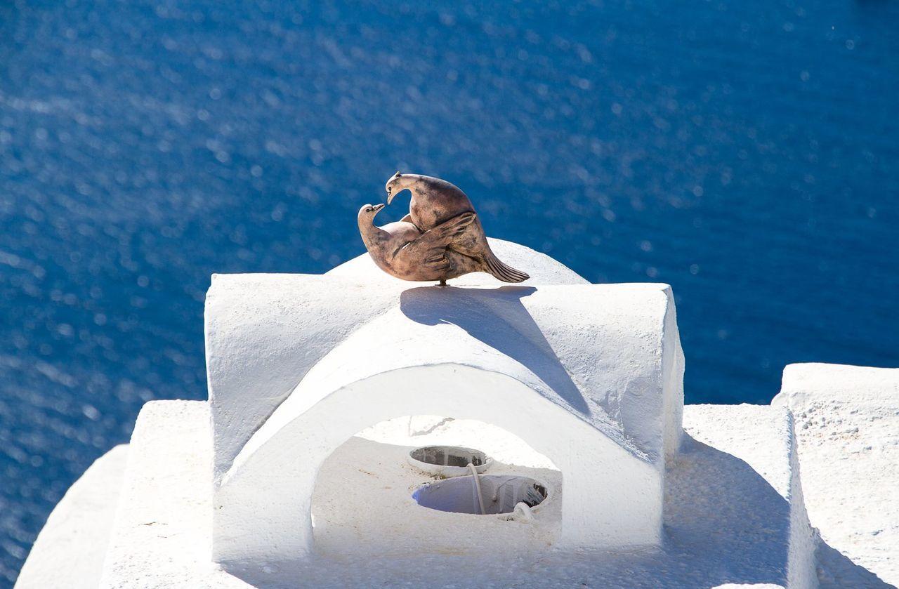 Beautiful stock photos of dove, Animal Representation, Art, Art And Craft, Close-Up