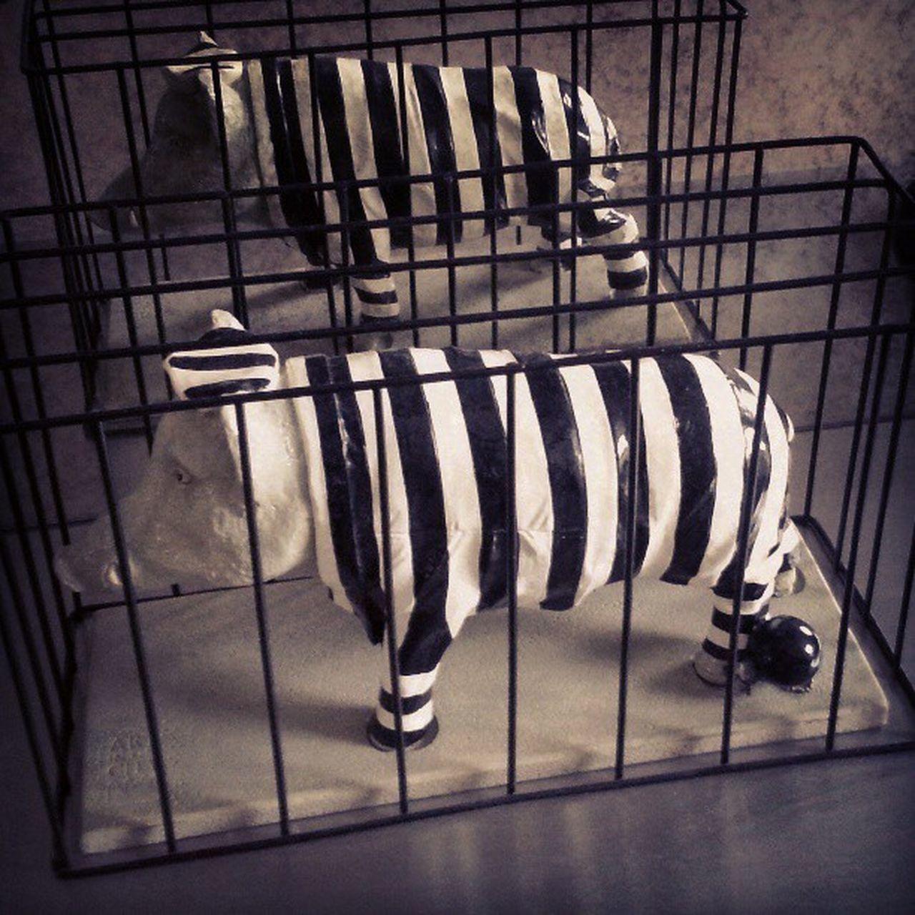 Pig Cage Stripes Oink Animal Black White Prison