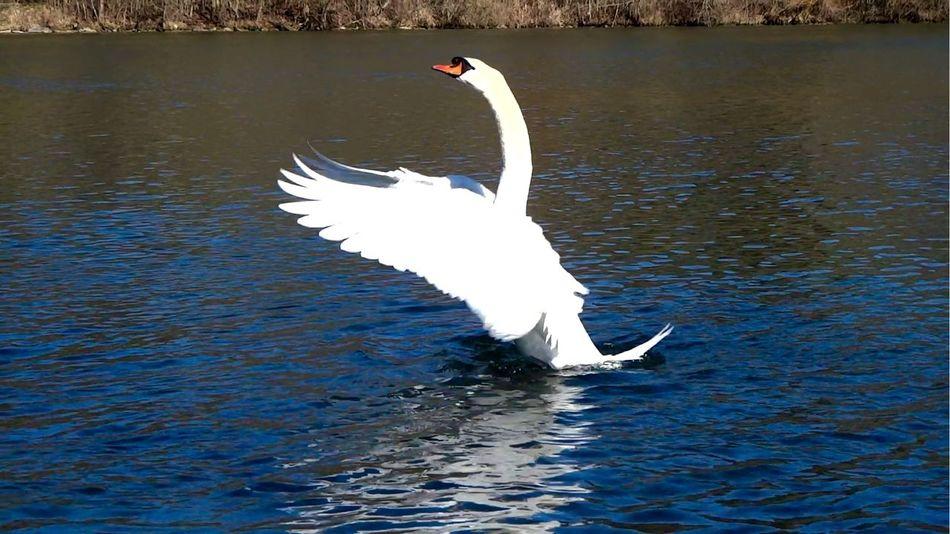 Beautiful stock photos of wings, Animal Behavior, Animal Neck, Animal Themes, Animals In The Wild
