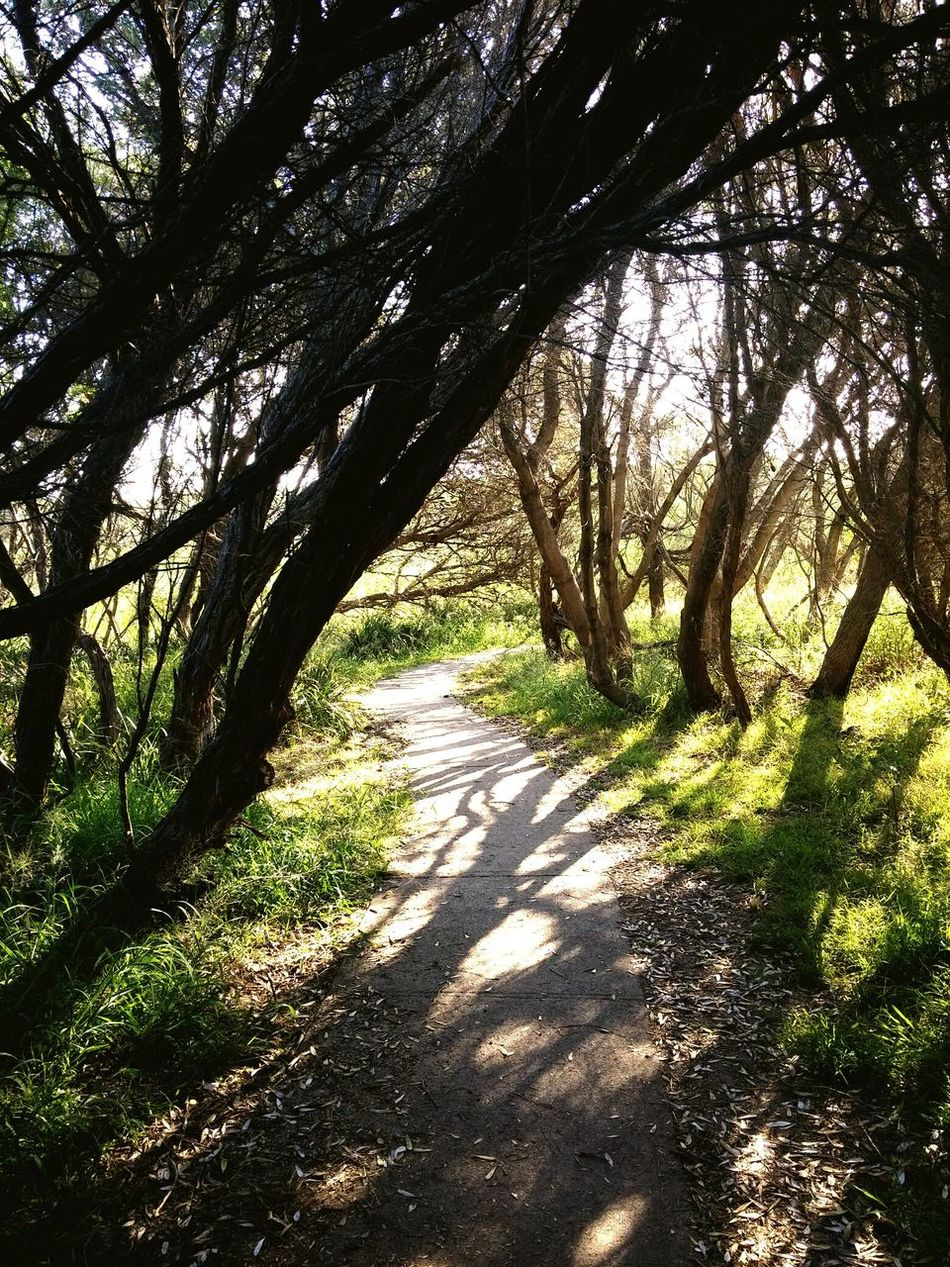 Tree Nature Beauty In Nature Outdoors Growth Tranquility No People Shadow Day Scenics Green Color Tranquil Scene Forest Backgrounds Landscape Sky Path Pathway Mystery Adventure Unknown Journey