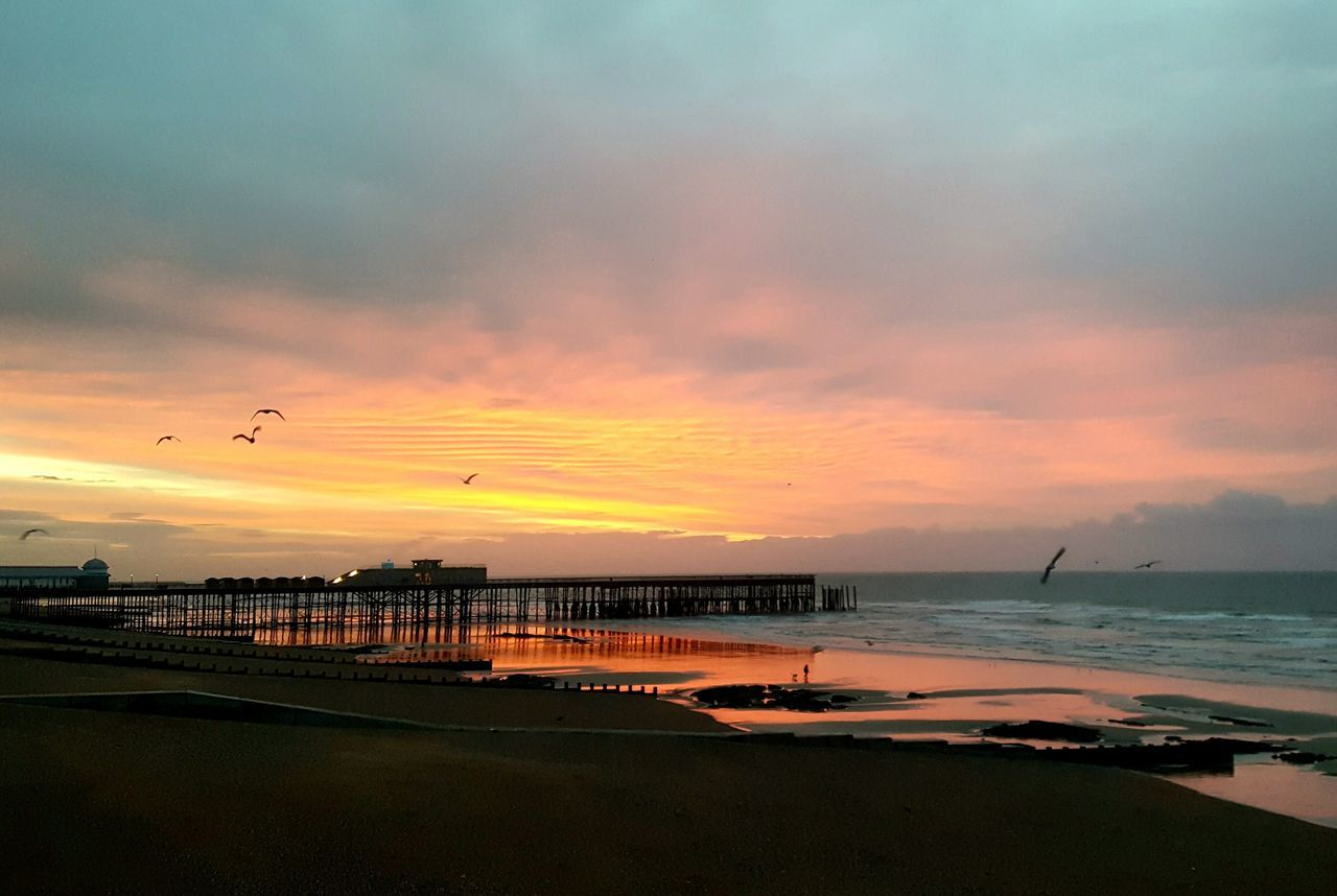 Sunrise Outdoors Scenics Travel Destinations Beauty In Nature Dramatic Sky Nature Reflection Beach Seashore Tranquility Pier Architecture Horizon Over Water Beauty In Nature Interesting Places Sea Seaside Birds Built Structure Dog Love