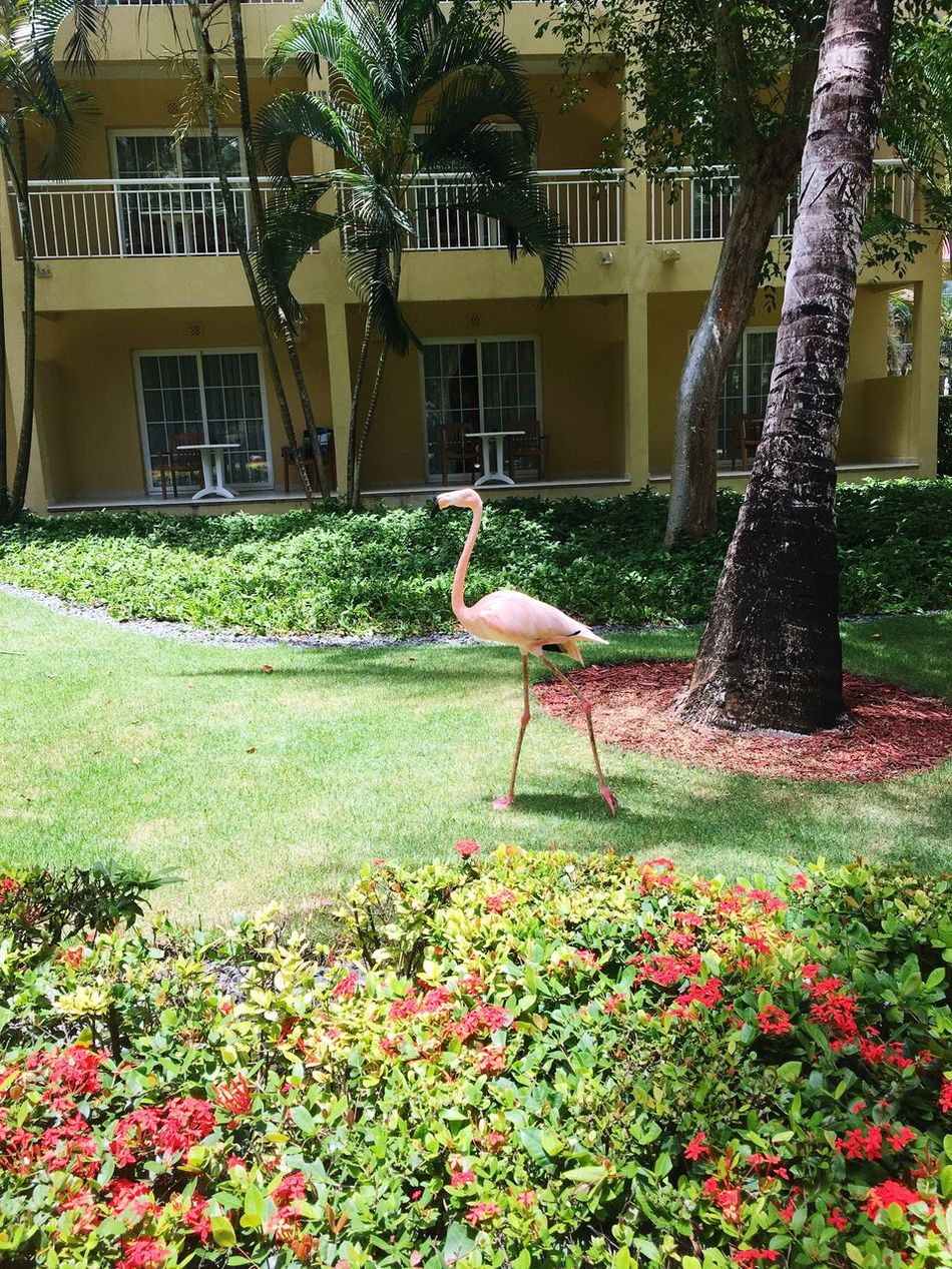 The Dominican Republic Growth Grass Outdoors Animal Themes Nature Bird One Animal Building Exterior Animals In The Wild Plant No People Built Structure Beauty In Nature Architecture Flower Tree Water