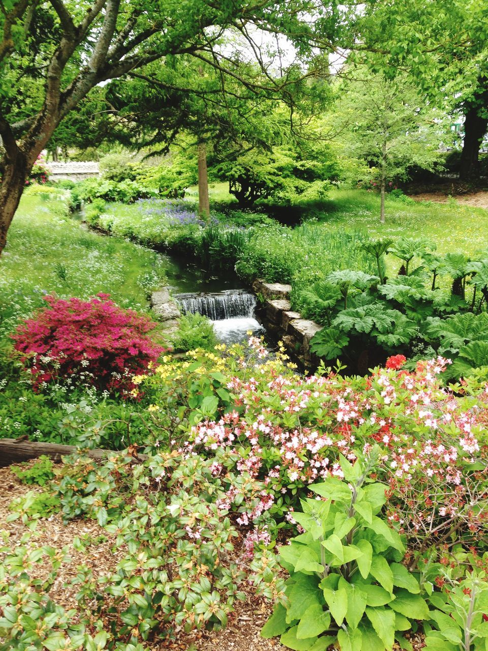 Plants And Stream In Park