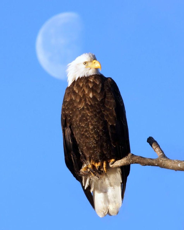 Beautiful stock photos of mond, Animal Head, Animal Themes, Animals In The Wild, Beak